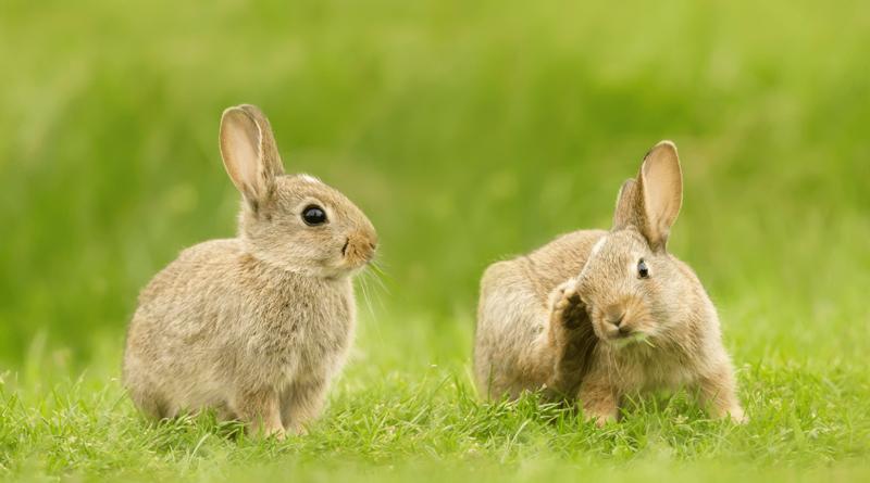 Institutional Portfolio Benchmarks: Slow Rabbits?